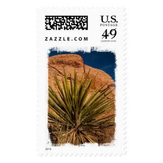 Vida vegetal de desierto envio