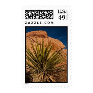 Vida vegetal de desierto franqueo