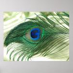 Vida verde del travesaño del pavo real de Apple Poster