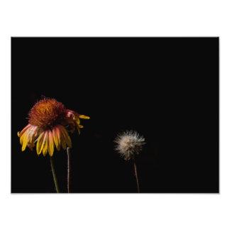 Vida y muerte fotografía