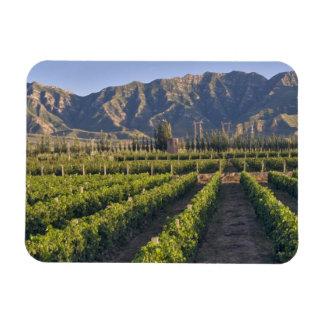 Vides de Cabernet-Sauvignon en Huailai Rongchen Iman De Vinilo