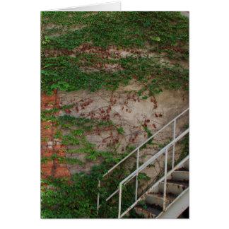 Vides de la hiedra, escaleras, pared de ladrillo, tarjeta de felicitación