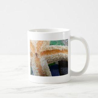 Vidrio de las estrellas de mar y de la playa tazas de café