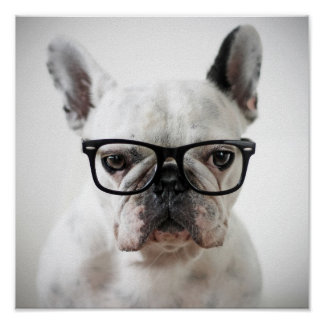 Vidrios del ojo morado del dogo que llevan francés póster