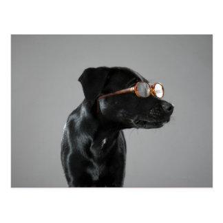 Vidrios que llevan del perrito tarjetas postales