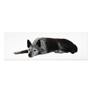 vieja colocación del perro fotografías