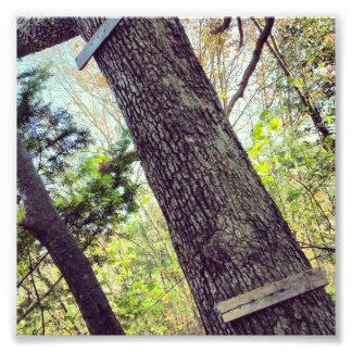 Vieja imagen del árbol fotografias