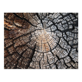 Vieja textura de madera fresca postal