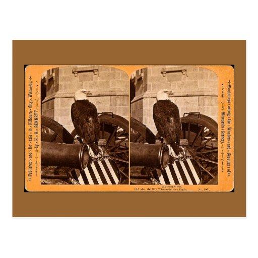 Viejo Abe, el águila Stereoview de la guerra de Postal