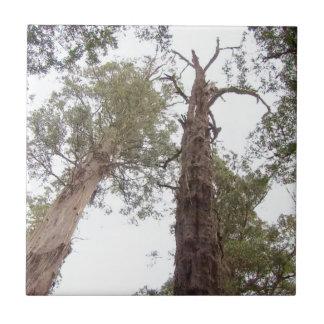 Viejo alcance de los árboles de Tasmania para el Azulejo Cuadrado Pequeño
