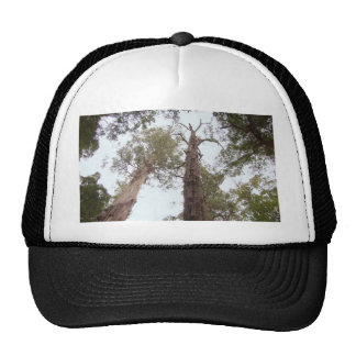 Viejo alcance de los árboles de Tasmania para el Gorras De Camionero