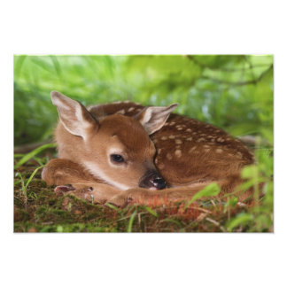 Viejo bebé Blanco-atado de dos días de los ciervos Fotografías