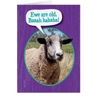 Viejo cumpleaños del tiro de las ovejas de la tarjeta de felicitación