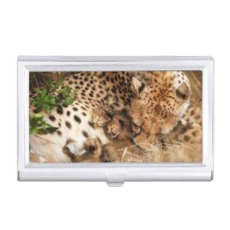 Viejo de un día de la preparación del guepardo cajas de tarjetas de negocios