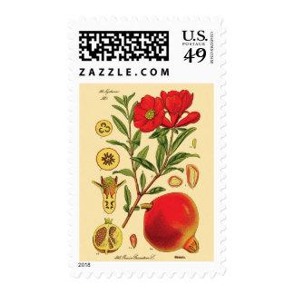 Viejo ejemplo de la granada sellos postales