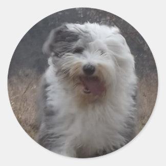 ¡Viejo pegatina inglés del perro pastor - funcione