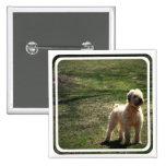 Viejo Pin inglés acortado del perro pastor