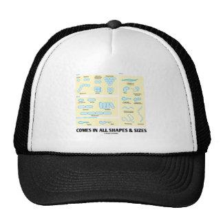Viene en todas las formas y tamaños (la morfología gorras de camionero