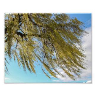 Viento en hojas del baile cojinete