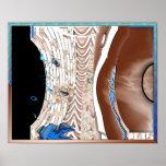 vientres huecos (V-curvados) (tubella) por En-Mara Posters