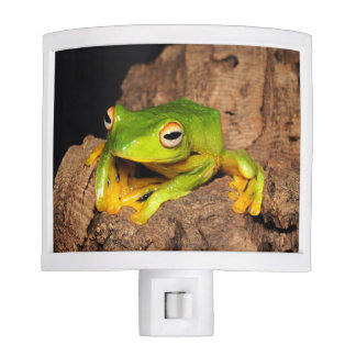 Vietnamese Black-Webbed Gliding Frog Night Light