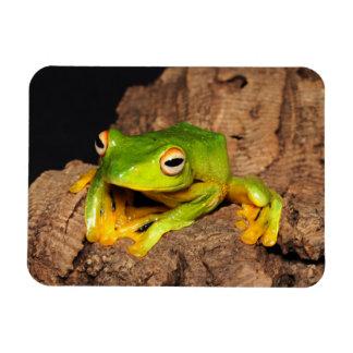 Vietnamese Black-Webbed Gliding Frog Rectangular Photo Magnet