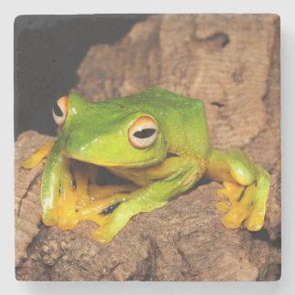 Vietnamese Black-Webbed Gliding Frog Stone Coaster