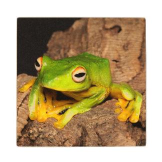Vietnamese Black-Webbed Gliding Frog Wood Coaster