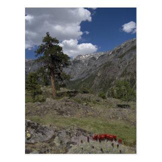 view along sutton mine trail postcard