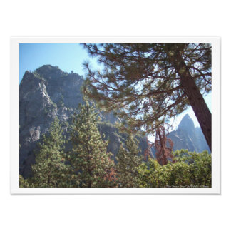 """""""View From a Forest"""" Yosemite Valley Poster Photo Print"""