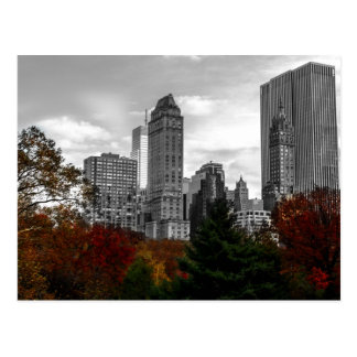 View from Central Park in New York City Postcard