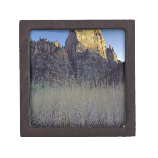 View from Virgin River flood plain, Zion Canyon Jewelry Box