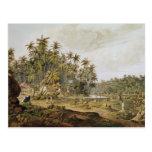 View near Point du Galle, Ceylon Postcard