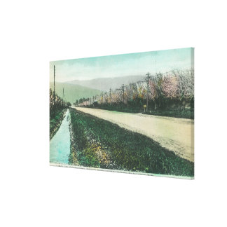 View of a Country Road During Springtime Canvas Print