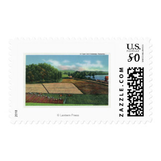 View of a Cranberry Plantation Postage