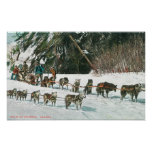 View of a Husky Dog-Sled Team Poster