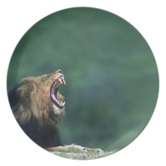 View of a Lion (Panthera leo) opening its mouth Dinner Plate