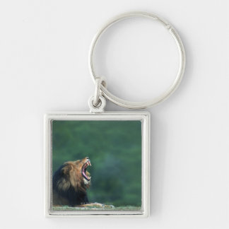 View of a Lion (Panthera leo) opening its mouth Keychain