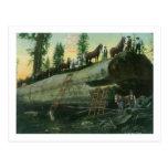 View of a Logging Team on a Fallen Redwood Postcard