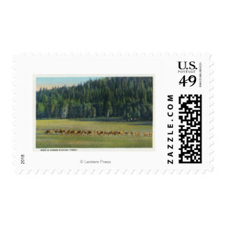 View of a Pack of Deer Grazing Stamp