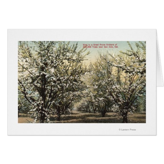 View of a Prune Orchard of 300,000 Trees Card