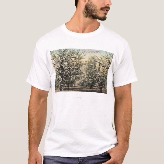 View of a Prune Orchard of 300,000 Trees T-Shirt