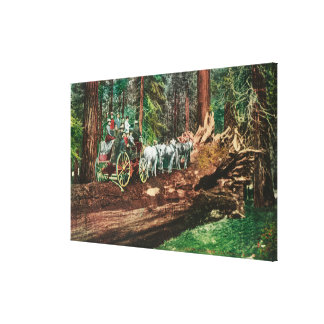 View of a Stage Coach on Top of a Fallen Giant Canvas Print
