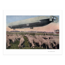 View of a Zeppelin Blimp over Grazing Sheep Postcard