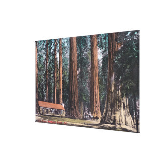 View of Big Trees in Mariposa Grove Gallery Wrap Canvas