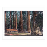 View of Big Trees in Mariposa Grove Postcard