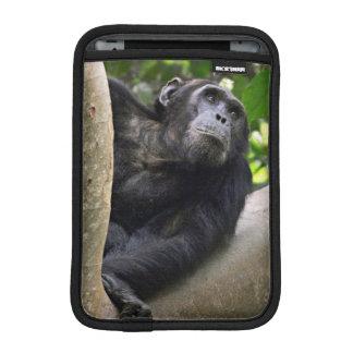 View Of Chimpanzee (Pan Troglodytes) In Tree iPad Mini Sleeve