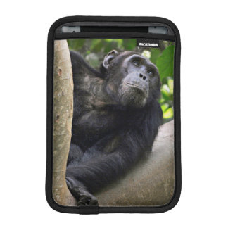 View Of Chimpanzee (Pan Troglodytes) In Tree Sleeve For iPad Mini