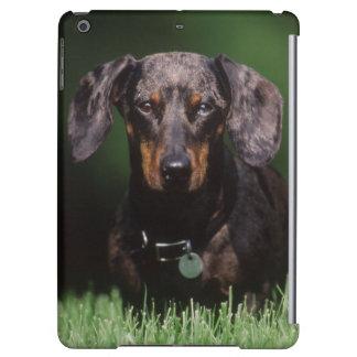 View of Dapple colored Dachshund iPad Air Covers