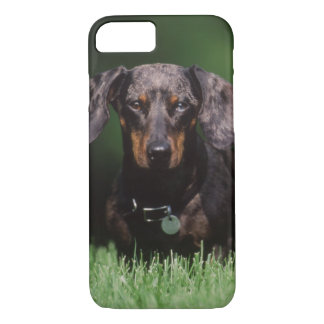 View of Dapple colored Dachshund iPhone 7 Case